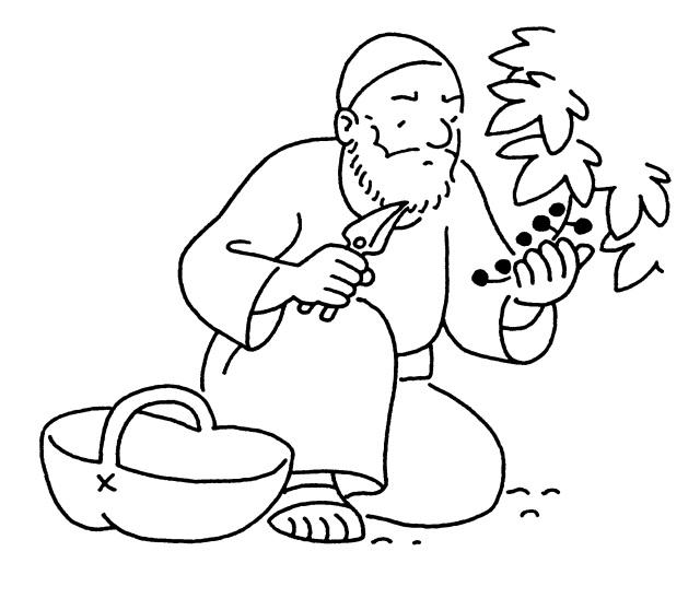 Quels raisins portons-nous ? Un évangile et deux homélies !